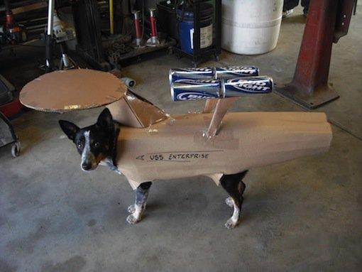 Trekkie Dog