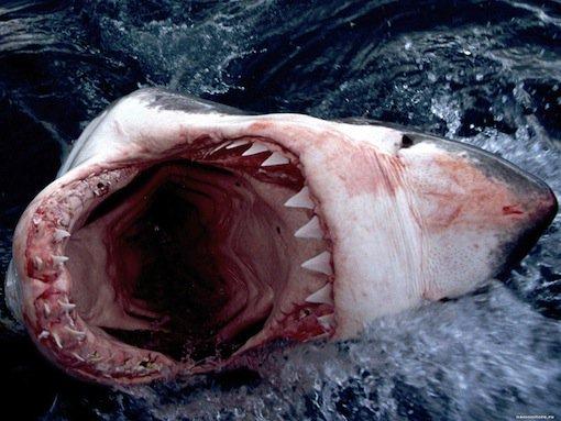 Best Teeth Whitening Toothpaste Shark