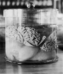 braingrey