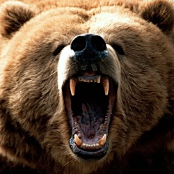 How To Beat Up Animals - Bear