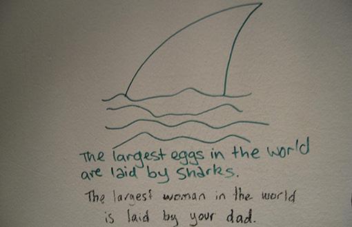 shark510