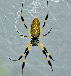 What really happens when a spider bites you modern man for What does a garden spider look like