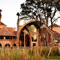 resorts, hotels, vacations