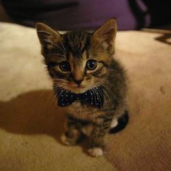 first date attire, kitten-bow-tie