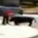 man wrestles bull