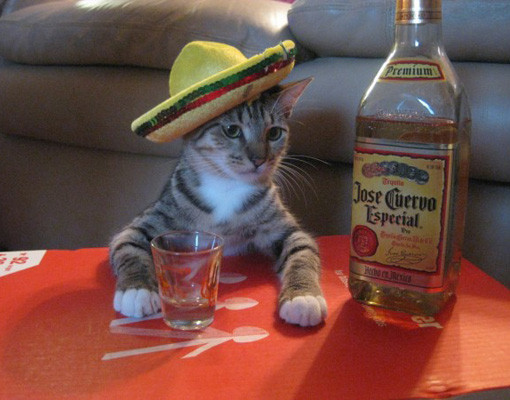 7 Things Every Guy Should Know About Tequila