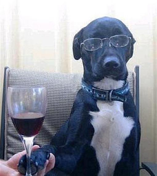 drunk dogs photos wine