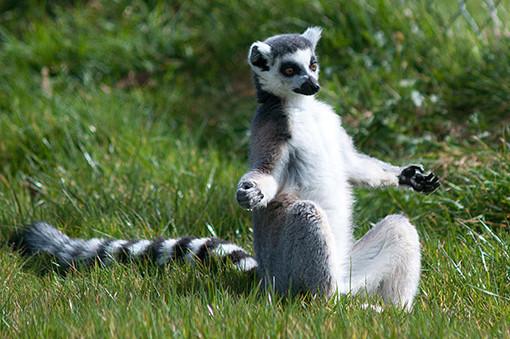 yoga animal