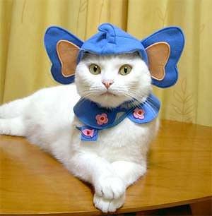 cat_21