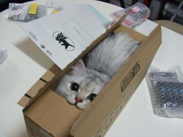 cat_25