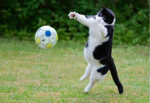 funny-cat-ball-playing-kitten