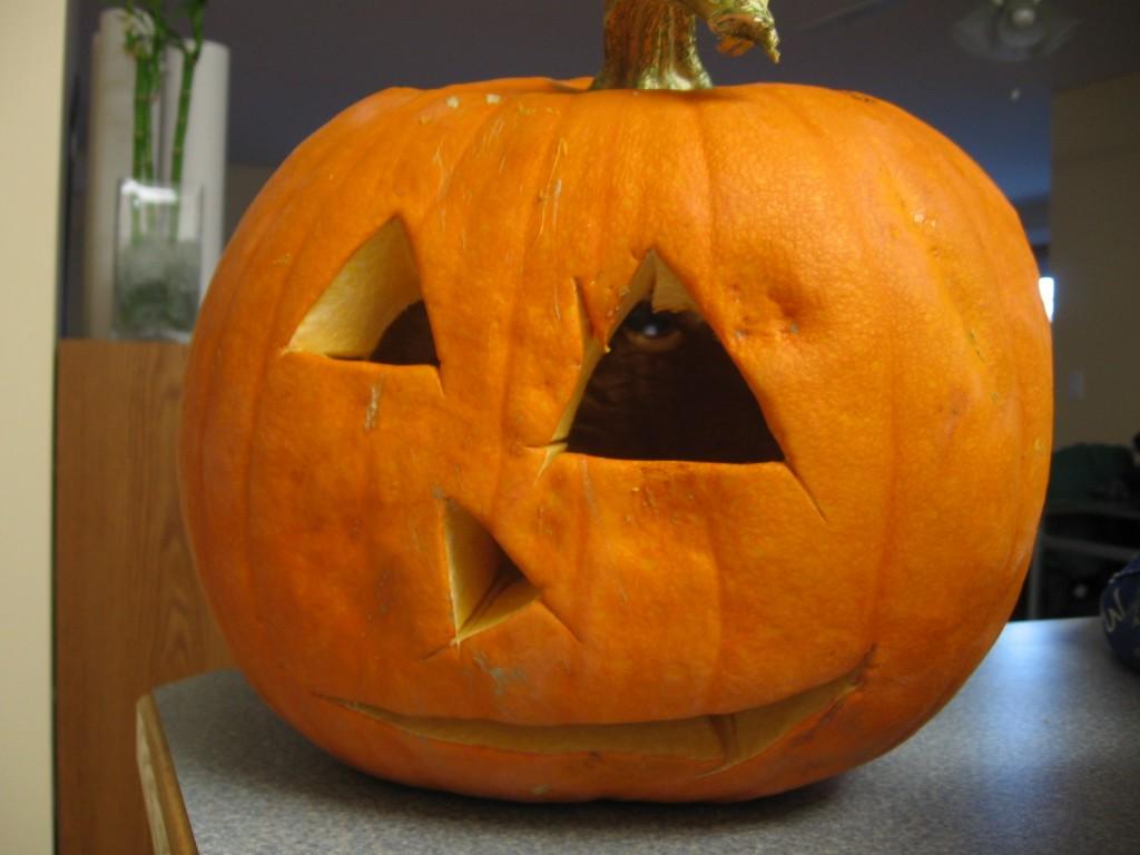 pumpkin fail 15