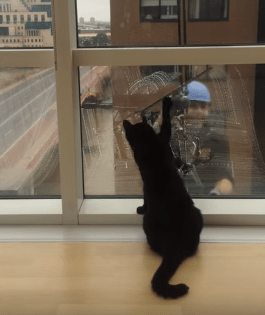 cat video window washer funny