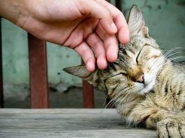 cat facts that are totally meowawesome